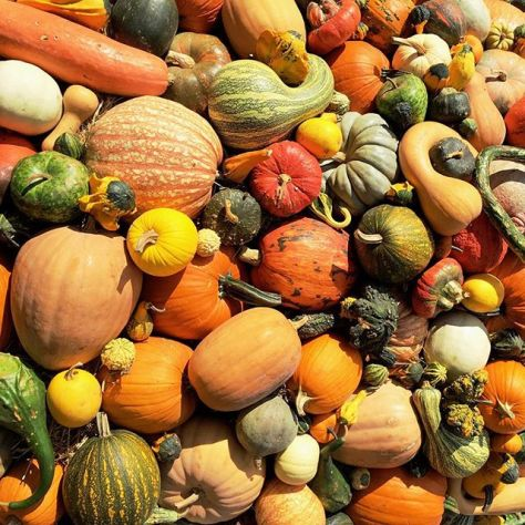 Gourdgeous #latergram