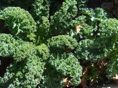 Pacoima Boy & Girls Club | Garden Delights