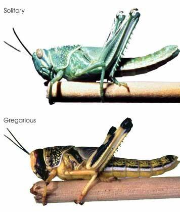 Cicadas vs Periodic Cicadas vs Grasshoppers vs Locusts (3/3)