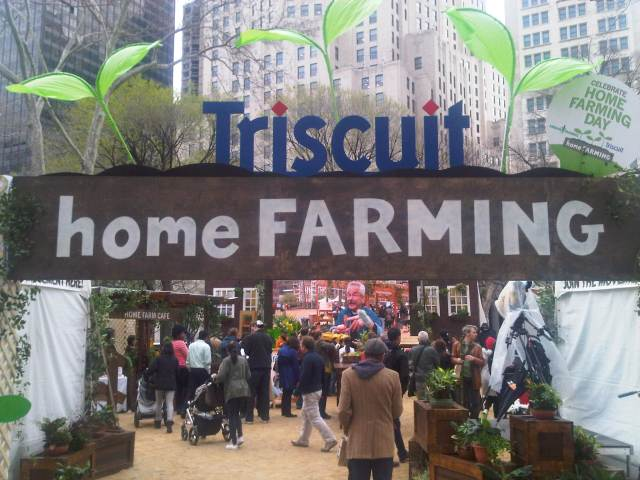 Triscuit-home-growing