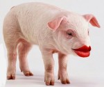 Pig in Lipstick