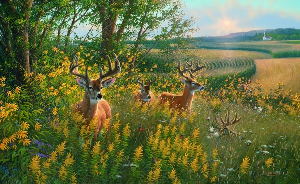 Whitetail Deer Chisholm Valley Wildlife Art