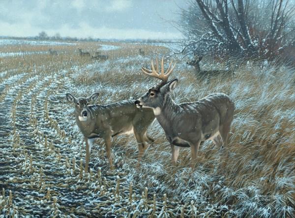 Whitetail Deer Painting Wildlife