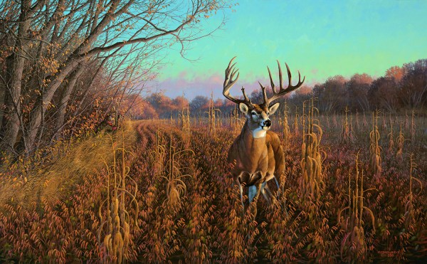 Mel Johnson And Beanfield Buck-whitetail Deer Chisholm Valley Wildlife Art