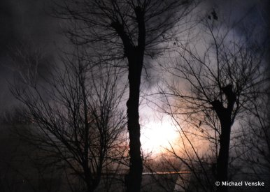 Firecrackers exploding in dark background silhouette trees