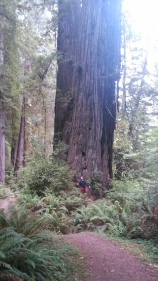 Michael at Prairie Creek Redwoods State Park
