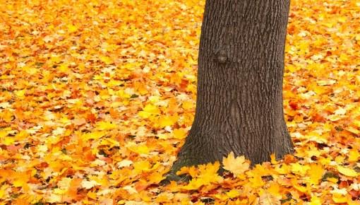 Falling Leaves, Weeping Trees