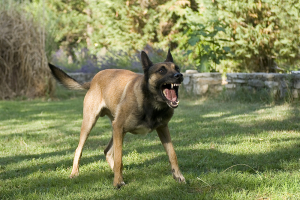 dogbite (1)