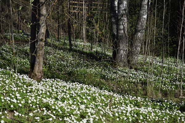 Primavera flores Finlandia