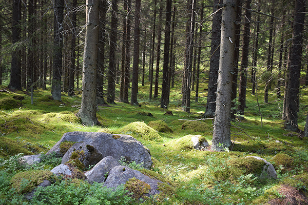 paseo bosque Finlandia