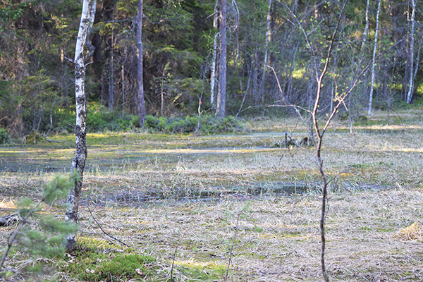Suo Turbera zona húmeda Finlandia
