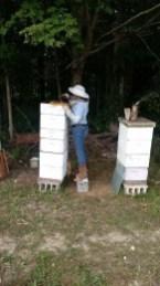 RCs Bees-5