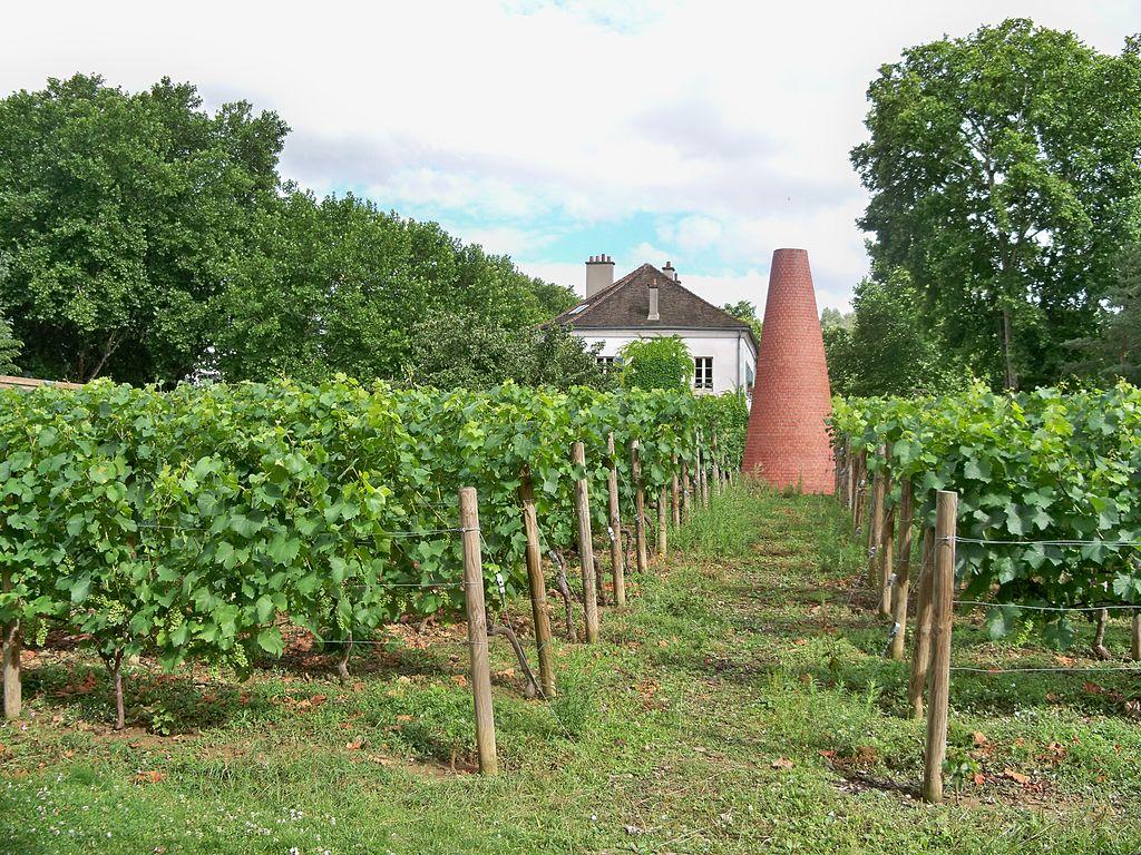 Vignes du parc de Bercy (Paris), Wikipedia (Licence CC-BY-SA, Veronique Pagnier, WIkipedia), Michel Kalifa - Maison David