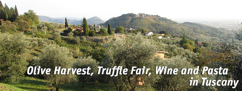 Help out at a Tuscan Olive Harvest