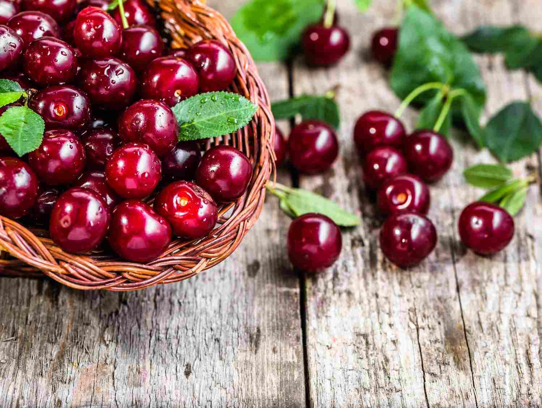 Cherries of Vignola