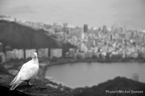 Colombe Rio