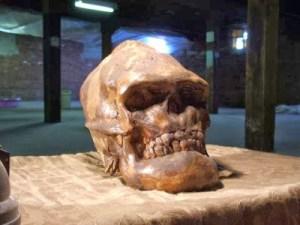 Le crâne de cette créature Sasquatch ou Bigfoot a été découvert dans les montagnes Rocheuses.