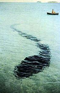 Type de serpent de mer photographié en Australie.