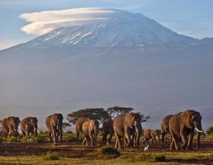 Mont Kilimandjaro 003