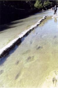 Celles-ci font l'objet d'une grande controverse outre-Atlantique. Découvertes en 1908, près de Glenn Rose ( Texas ), elles montrent des traces humanoïdes de géants de 4 mètres de hauteur ( selon les standards modernes ), mêlées avec des traces de dinosaures ! ( de 120 à 130 millions d'années )  Même si les traces que l'on aperçoit au premier plan sur la photo du haut  ( à droite ) ont sans doute été laissées par les membres antérieurs ou les métatarses de ces dinosaures, on a du mal à croire que l'érosion ait pu les transformer en celles que l'on peut voir dans la photo en dessous.