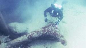 Un plongeur examine un tronc d'arbre  qui a été  estimé à 11,000 ans.Ces  petites découvertes ont permis de dater l'Atlantis suédoise.