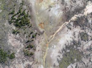 L'activité s'intensifiant ,nous remarquons de nombreux arbres morts.