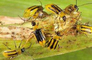 un insecte très social.