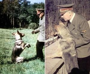 """Le dictateur est photographié avec ses deux bergers allemands Blondi et Bella. Il est connu pour avoir tué son chien Blondi plusieurs minutes avant  son  suicide """"officiel"""" dans le  Führerbunker en 1945."""