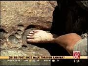"""En février 2002  James Snyder, un habitant de la région de Ramona, a fait cette découverte étonnante lors d'une balade dans la forêt nationale de Cleveland.  En sortant des sentiers battus à la recherche d'or dans le massif de Gowers, Snyder est tombé sur une empreinte géante de pied fossile dans la roche granitique de ce qui a sans doute été un cours d'eau il y a longtemps... très longtemps...  Snyder, qui pense qu'il pourrait s'agir de l'empreinte d'un """"Bigfoot"""", aimerait que des scientifiques fassent l'effort de se déplacer dans ce coin perdu, à plus d'une heure et demi de marche dans des montagnes difficiles d'accès pour étudier sérieusement cette empreinte..."""