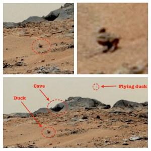 En Août 2013, par exemple, une photo de Curiosity Rover a montré ce qui semblait être un canard sur Mars