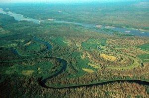 CC Pembina Institute - Forêt boréale le long de la rivière Athabasca /