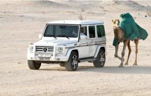 Un citoyen aisé de Dubai fait faire une marche de santé à son animal de compagnie ,dans le désert.