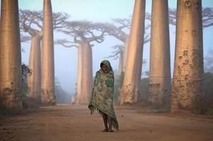 Une jeune fille malgache se déplace au milieu des baobabs,uniquement vêtue d'un mince tissu.