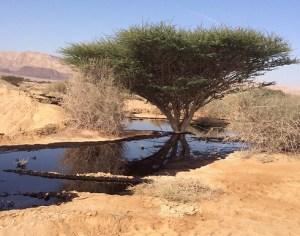 Une fuite de pétrole négligée au nord d'Israel...l'environnement on s'en fout!