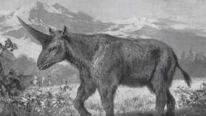 La licorne de Sibérie devait peser 5 tonnes.