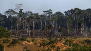 deforestation-en-amazonie_4105170