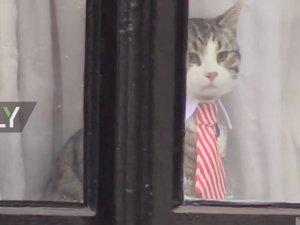 Au moins le chat a la fenètre pour regarder!