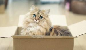 science-des-chats-pourquoi-les-felins-aiment-ils-autant-les-boites