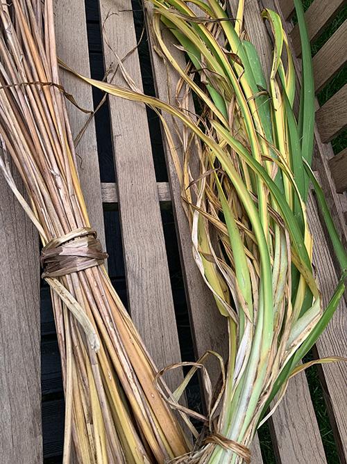 nature-végétaux-création-objet-michele-forest-design