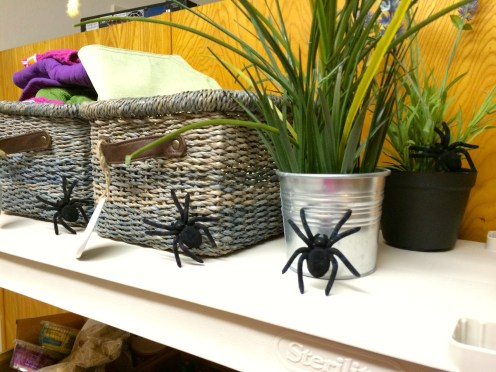 Eek, spiders in the kitchen!