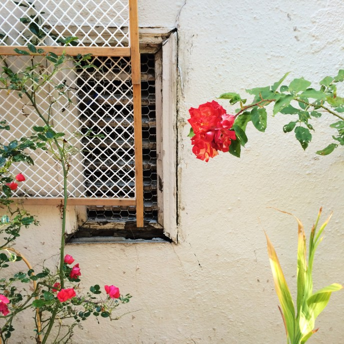 Pretty (real) flowers against a wall.