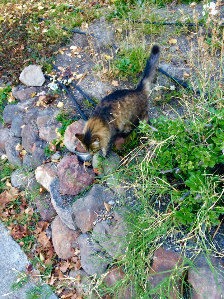 Kitty in the yard. Not my cat but very friendly all the same! <3