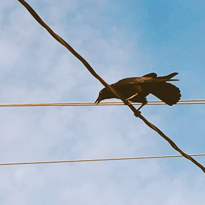 Crow on a power line. He or she was cawing. I associate crows with fall.