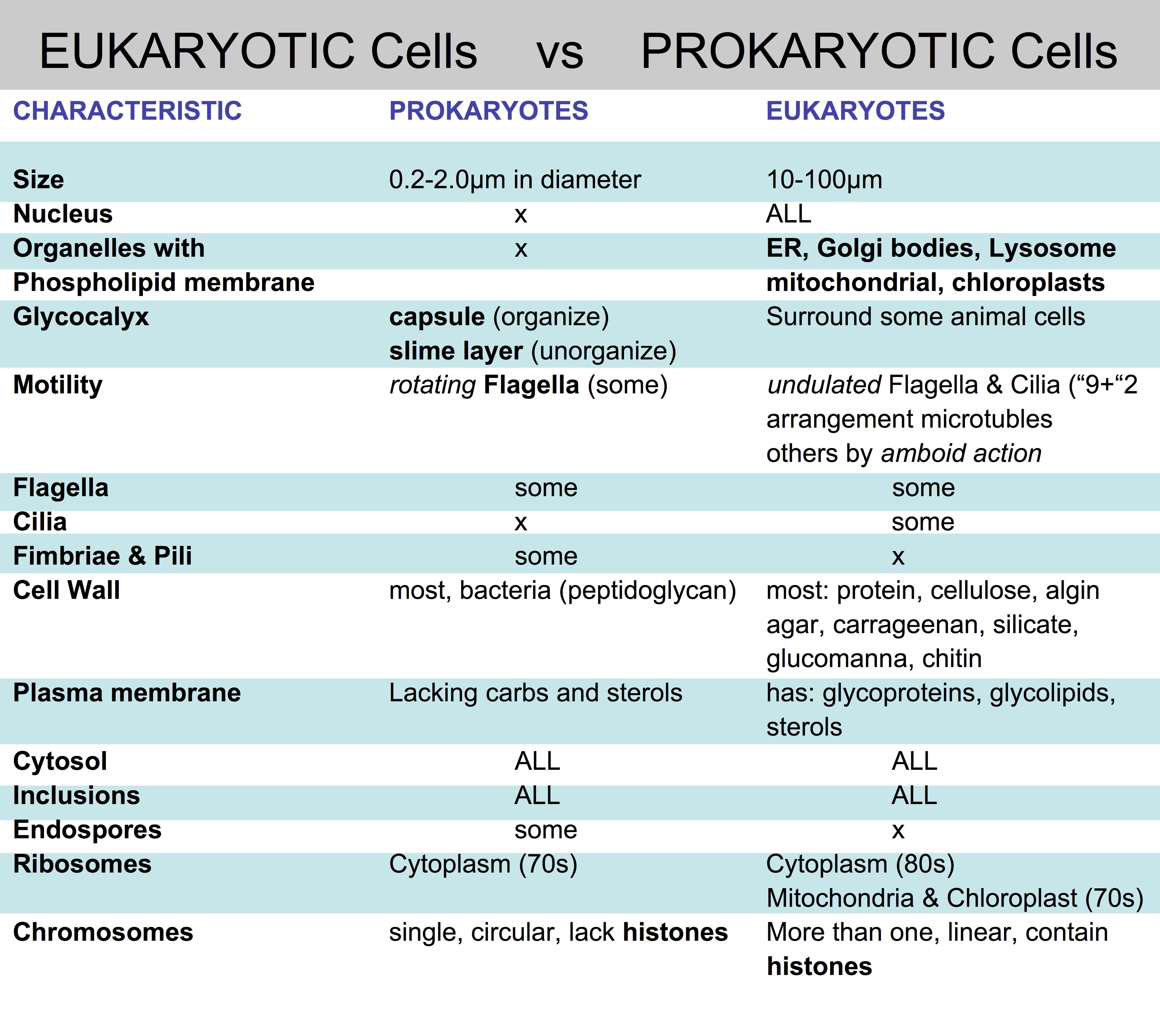 Cell Types Prokaryotes V Eukaryotes Plant V Animal