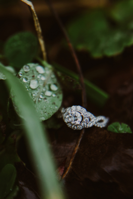 Halo-Ring-Photo-Leaves-Dew-Martinsville-Indiana
