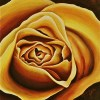 """""""Yellow Rose"""" Original Acrylic Painting by Michelle East"""