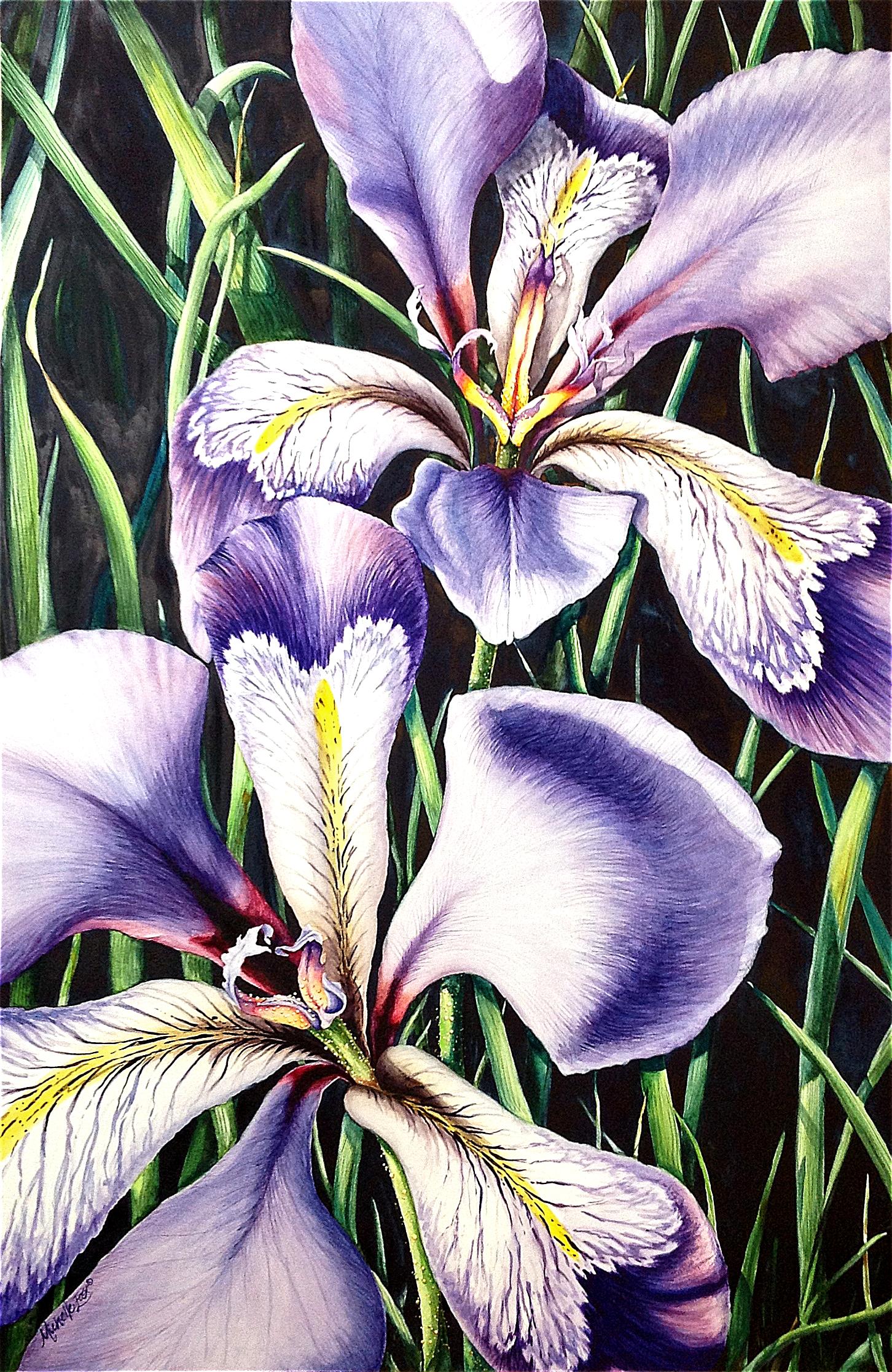 Iris rhapsody michelle east art louisiana irises watercolor painting by michelle east izmirmasajfo