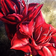 Michelle East_All Things New_Red Amaryllis