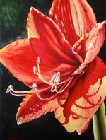Red Amaryllis watercolor painting by Michelle East