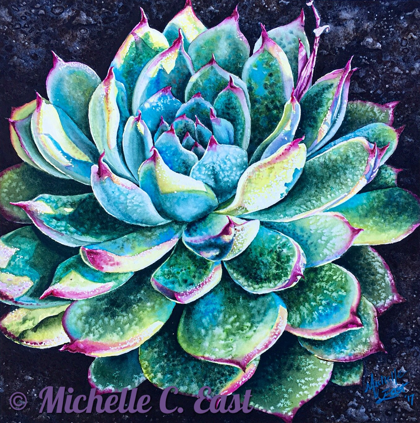 Succulent in the Morning Light By Michelle C East